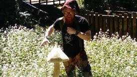 mushroom wizzrad